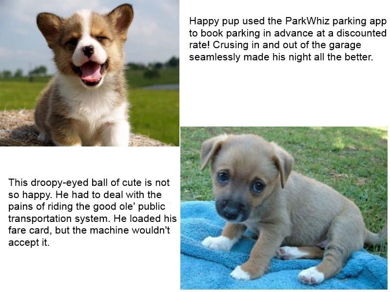 parkwhiz puppy