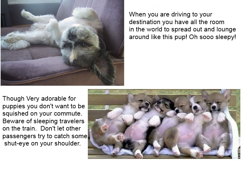puppies-public transportation
